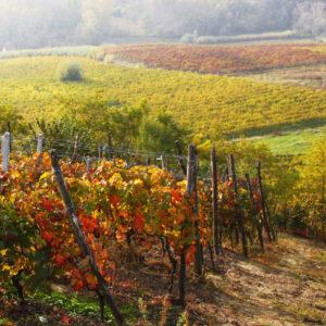le vigne della valpolicella di verona